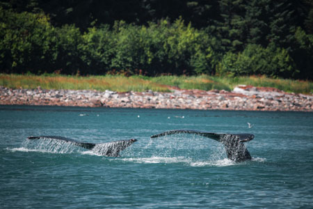 Whale Watching Travel Insurance